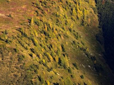 Les mélèzes dorés et leurs ombres