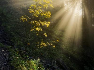 L'automne en sous bois