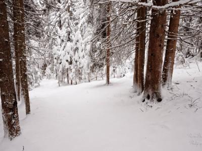 Une balade en forêt enneigée